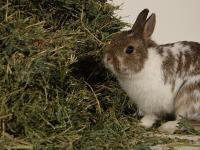 Foto Fieno per il Coniglio