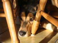 Foto Perchè il cane non viene quando lo chiamo?