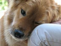 Foto Benefici del Cane sull'Uomo