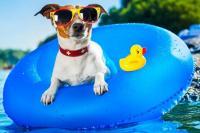 Foto Come proteggere il Cane dal caldo estivo