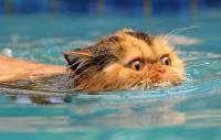 Foto I Gatti sanno nuotare?