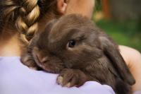 Foto Il coniglio può mangiare frutta secca?
