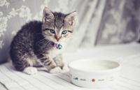 Foto Il Gatto può mangiare ricotta?