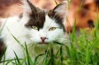 Foto Il Gatto può mangiare spinaci?