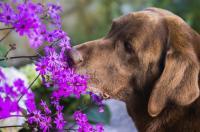 Foto Curare il Cane con l'Omeopatia