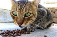 Foto Alimentazione per il Gatto anziano