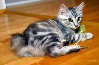 Foto Il Gatto vomita? Cause e cure
