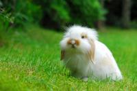 Il Coniglio ha lo stomaco gonfio: cause e trattamento