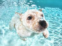 Foto Come insegnare a nuotare al Cane