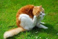 Foto Quanto dura un antiparassitario per Gatti?