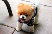 Foto Perche' il mio cane non cresce?