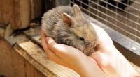 Foto Vaccini per il Coniglio: quali sono e quando farli