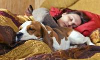 Foto Posso dormire con il Cane?