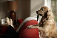 Foto Quanto costa mantenere un Cane?