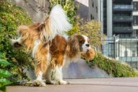 Foto Insegnare al Cane a fare pipì fuori