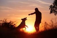 Foto Il rinforzo positivo nei Cani