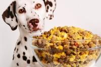 Foto 5 Ricette casalinghe per il cane