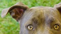 Foto Ittero nel Cane: cause e trattamento