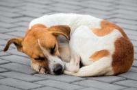 Foto Cane e leptospirosi | Sintomi e contagio della Leptospirosi canina