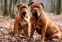 Foto Meglio un cane maschio o femmina?