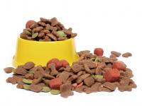 Foto Miglior cibo per cani: qual'è?