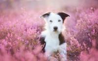 Foto Quanto costa sterilizzare il cane?