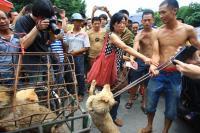 Foto Orrore in Cina: fermiamo il ''Festival della Carne di Cane''