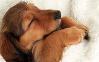 Foto Sognare cani: cosa significa?