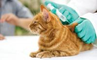 Foto Vaccini per i gatti: quali sono e quando farli