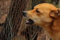 Foto Il mio cane è aggressivo: perchè?