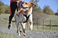 Foto Come evitare che il cane scappi