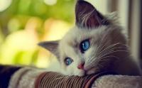 Foto Il mio gatto ha la tosse: cause e trattamento