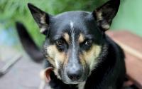 Foto Ematochezia (sangue nelle feci) nel cane