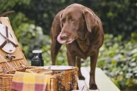 Foto Il cane può mangiare pane?