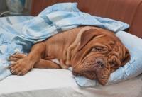 Foto Artrite nei cani: glucosamina, condroitina, steroidi e FANS