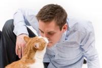 Foto Perchè il Gatto fa cattivo odore?