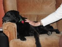 Foto Filariosi canina: cause, sintomi e trattamento