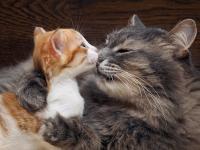 Foto Come cresce un gattino: le prime 6 settimane