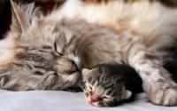 Foto Sterilizzare il Gatto: quando e perchè?