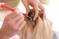 Foto Dentifricio per cani: alcuni consigli