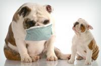 Foto Farmaci per la tosse nel Cane