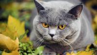 Foto Nomi giapponesi per Gatti