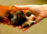 Foto Psicologia canina: capire il Cane