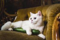 Foto Il gatto può mangiare cetrioli?
