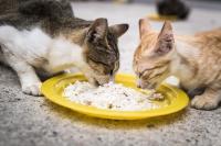 Foto I Gatti possono mangiare riso?