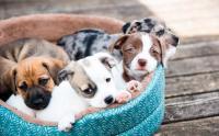 Foto Quanto dura la gravidanza nel Cane?