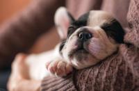 Foto Alimentazione del cucciolo: guida completa