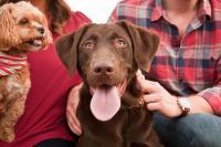 Foto Zecche nel cane: come riconoscerle e toglierle