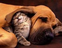 Foto Problemi dell'orecchio del cane