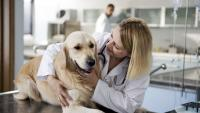 Foto Effetti della castrazione nel cane